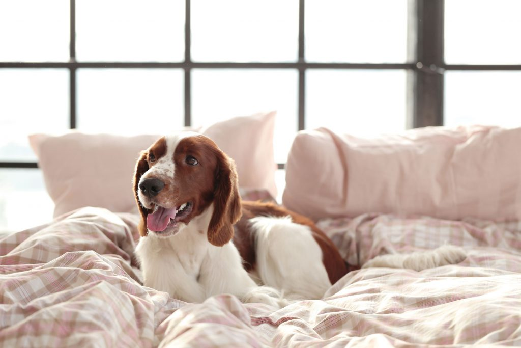 dog on the bed in the morning